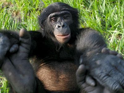 nav-start-lr-bonobo-handshake