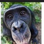 Profile picture of Queer Bonobo